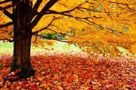 Советы по уходу за кожей осенью